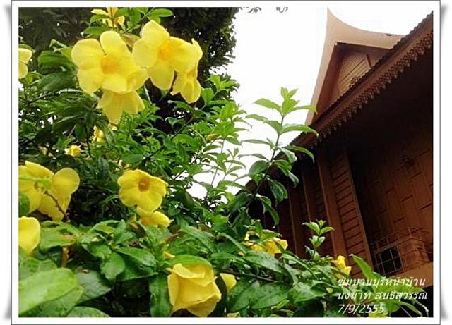 Large_photo659
